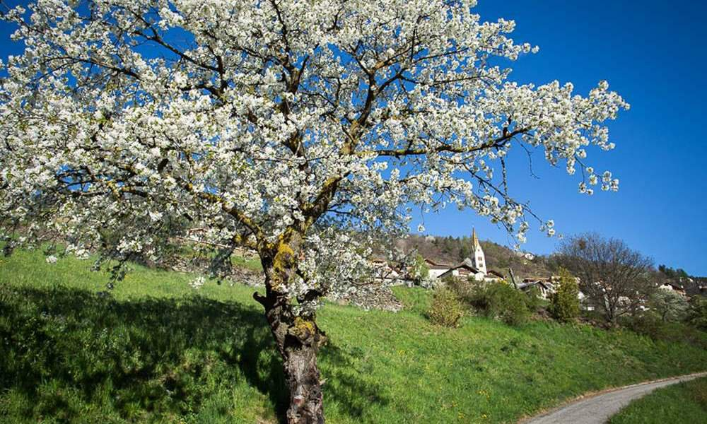 Discovering South Tyrol in spring
